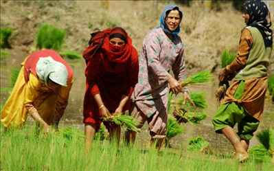 Agriculture Business in Srinagar