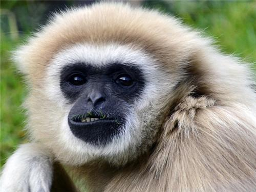 Gibbon Wildlife Sanctuary