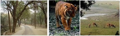 Kanpur Zoo