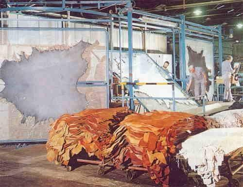Tanneries in Kanpur