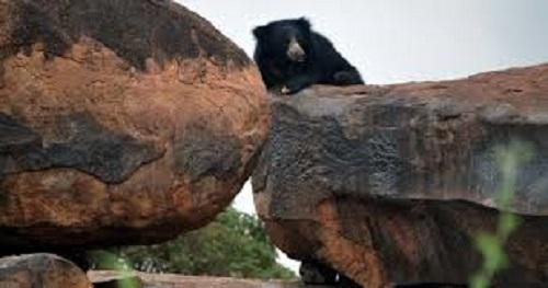 Daroji Sloth Bear Sanctuary in Hospet