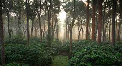 Coffee Trails in Karnataka