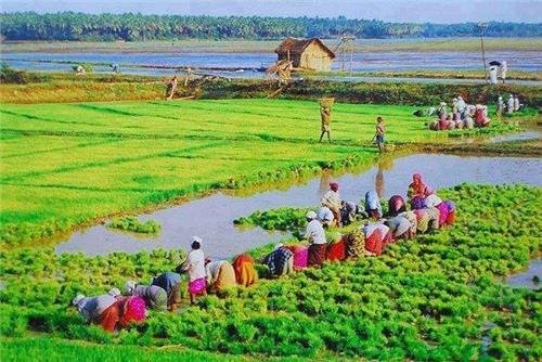 Business in Kerala