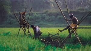 Rice farming in Kerala