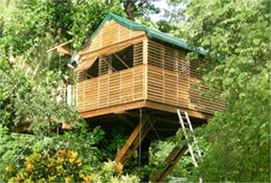 The Green Carpet Resorts & Tree House