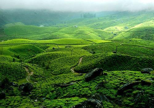 Idukki Tea Planations