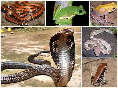 Periyar National Park and Wildlife Sanctuary Reptiles