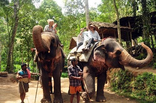 Periyar National Park and Wildlife Sanctuary Elephant Ride