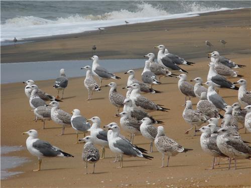 Migrant Birds Arriving at Bharathpuzha River