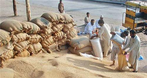 The Grain Market in Khanna