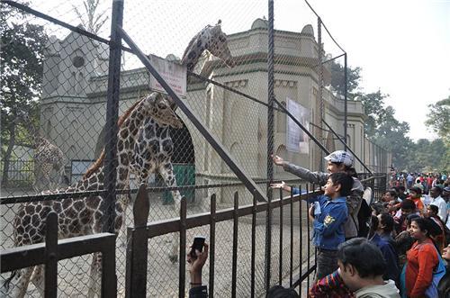 Wildlife in Kolkata
