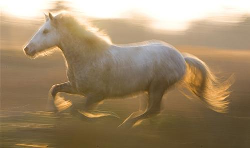 The spirit of the White Horse