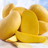 Dashehari mangoes in Lucknow