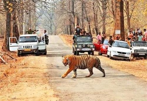 Melghat Tiger Reserve Forest