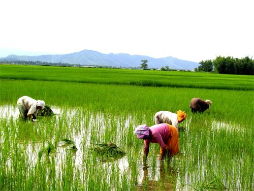 manipur Economy