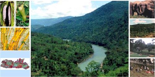 Meghalaya Forests