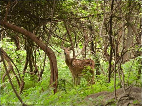 Nongkhyllem Wildlife Sanctuary