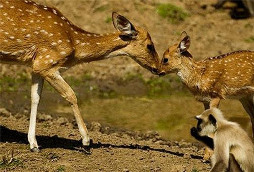 Wildlife sanctuaries near Mirzapur