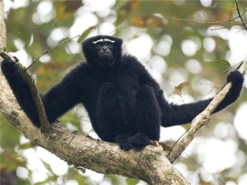 Top wildlife sanctuaries in Mizoram