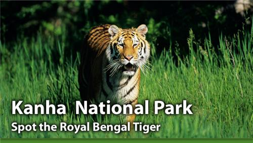 Wildlife destinations in Madhya Pradesh