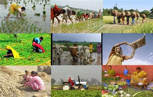 Agriculture in Seoni