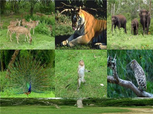 Wild Life in Bandipur National Park