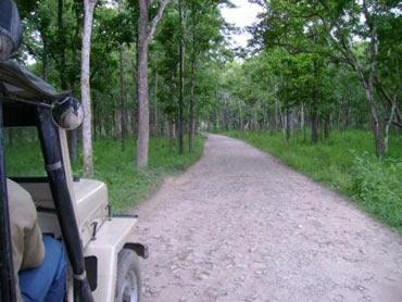 Bandipur National Park Mysore
