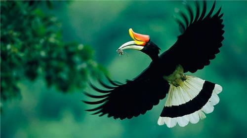 Wildlife in Nagaland
