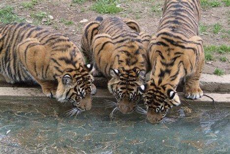 Maharaja Bagh Zoo in Nagpur