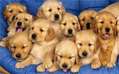 Pet-shops-in-Nagpur
