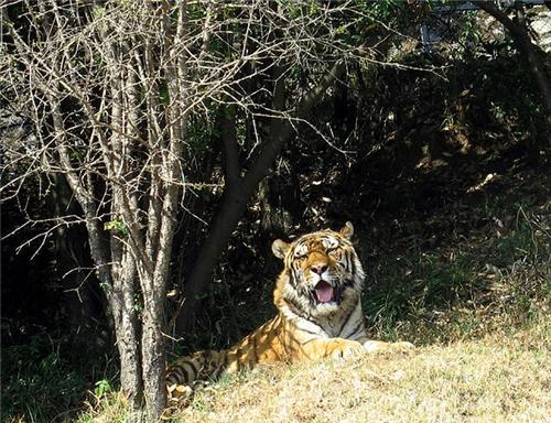 Nainital GB Pant High Altitude Zoo