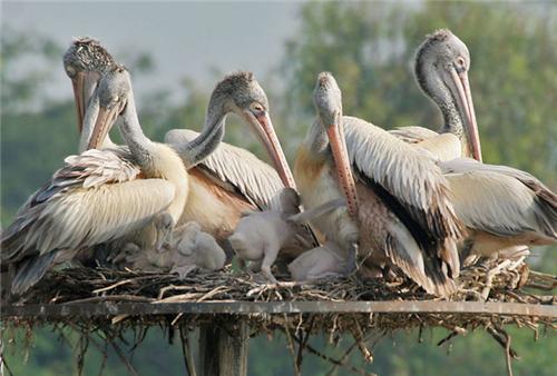 Rollapadu Bird Sanctuary in Nandyal