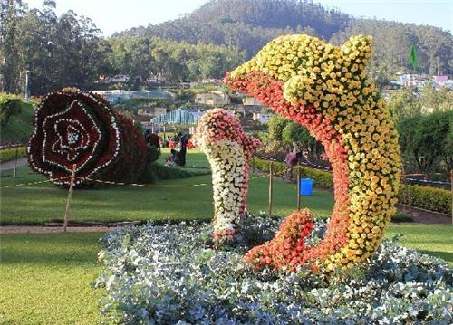 Ooty Flower Show