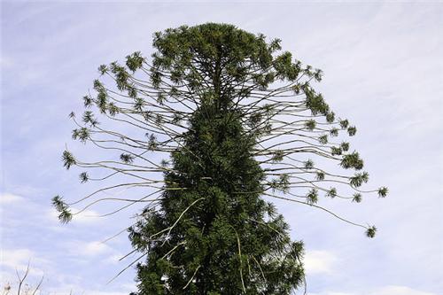 Botanical Gardens in Ooty