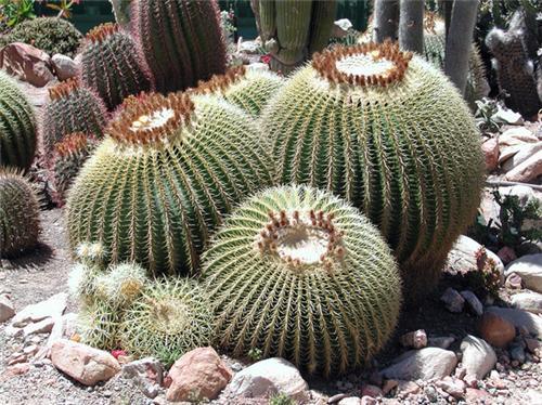 Cactus Garden - Panchkula