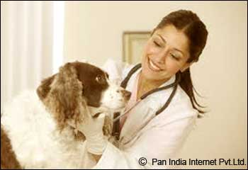 Famous Veterinary Hospitals in Patna, Bihar