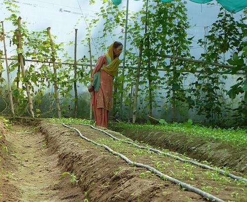 Rural Development in Punjab