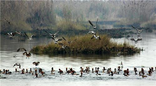 Bird Sanctuary at Hari Ke Pattan in Amritsar