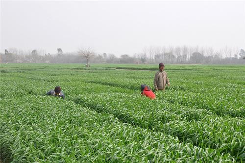 Agriculture Development in Punjab