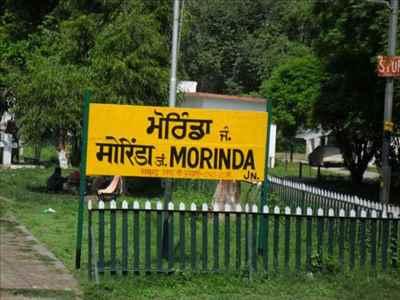About Morinda