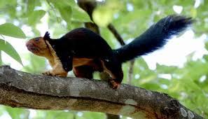 Bhimashankar Wildlife