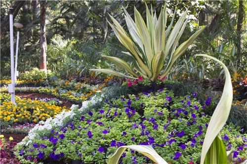 Empress Garden Pune Flowers