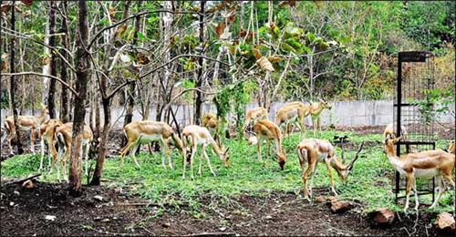 Rajiv Gandhi Zoological Park Katraj Pune
