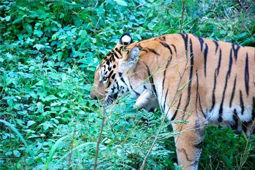 Katraj Zoo in Pune