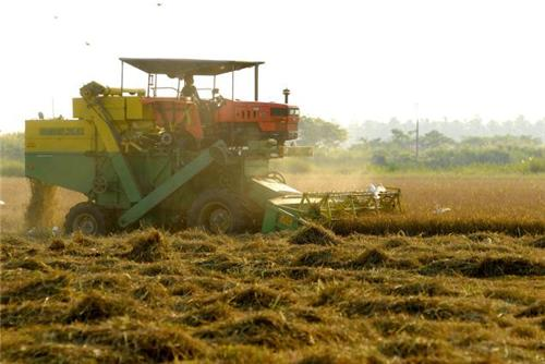 Agribusiness in Raichur