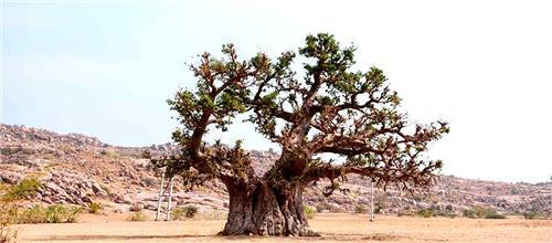 Natural Resources in Raichur