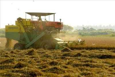 Agribusiness in Raichur