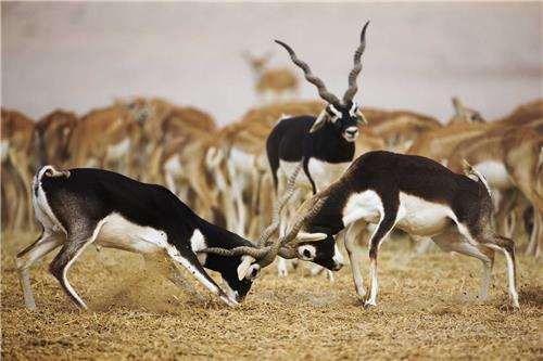 Fauna of Rajasthan
