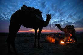 camel safari guide for foreigners