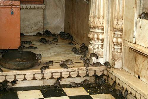 Karni Mata Temple in Rajasthan
